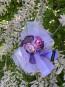 "Детска рокля ""ВИОЛА"" purple edition 5"